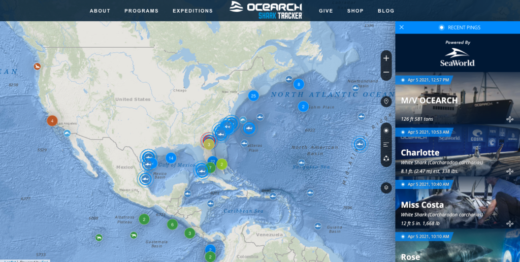 shark tracker website